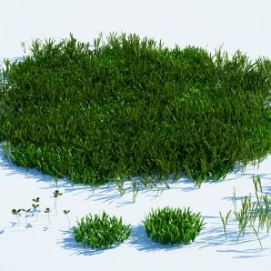 RocesHouse_Forest Grass