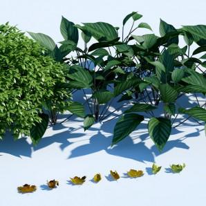 RocesHouse_forest_BUSH_leaves